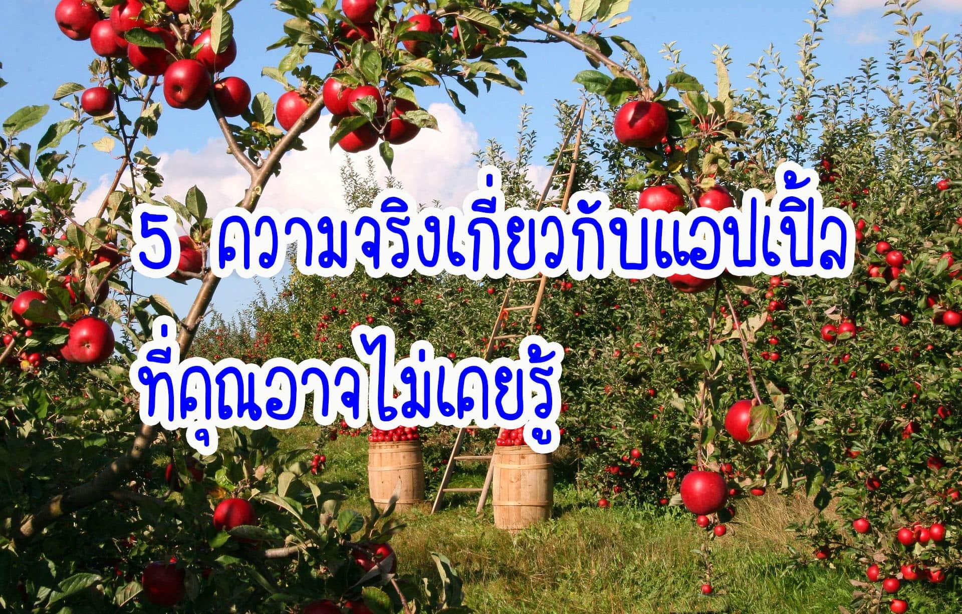 5 ความจริงเกี่ยวกับแอปเปิ้ลที่คุณอาจไม่เคยรู้