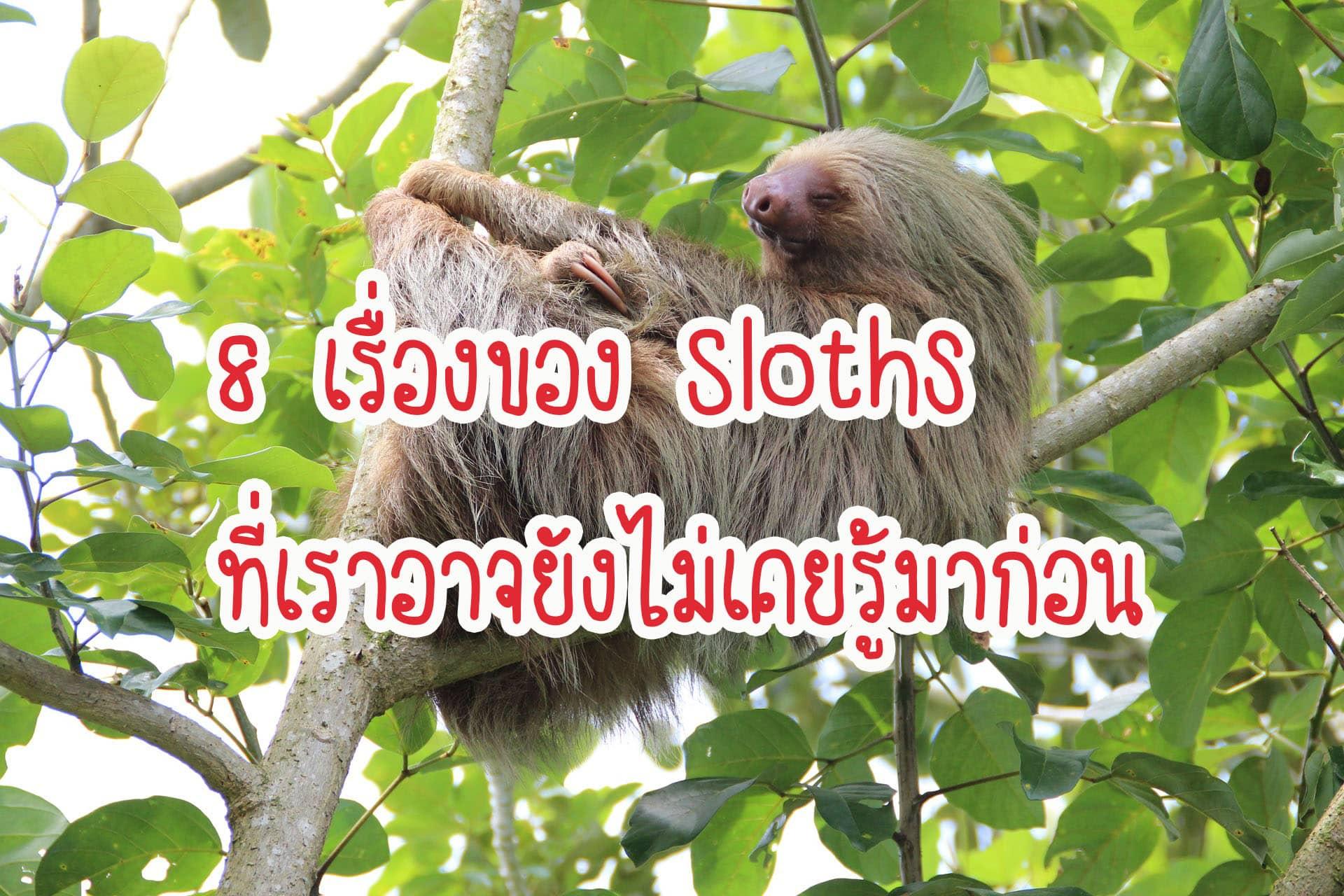 8 เรื่องของ Sloths ที่เราอาจยังไม่เคยรู้มาก่อน