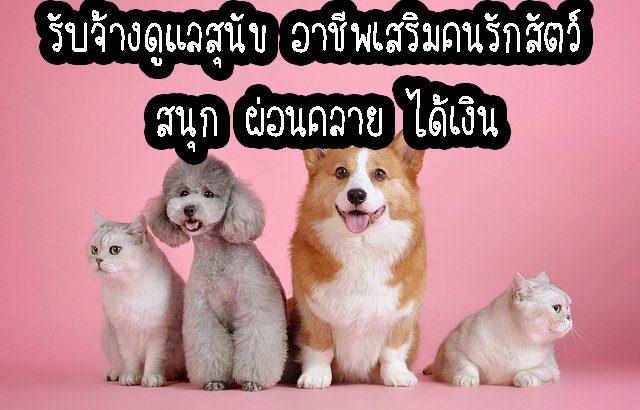 รับจ้างดูแลสุนัข อาชีพเสริมคนรักสัตว์ สนุก ผ่อนคลาย ได้เงิน